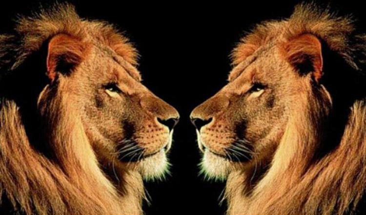 Ce ne place cel mai mult la zodia Leu. 5 calitati de invidiat